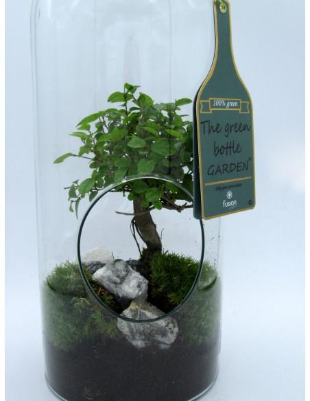pianta in vetro, bonsai in vetro