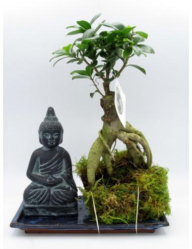 Kokedama |Bonsai di ficus ginseng Buddha