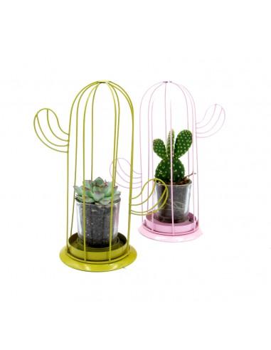 piante di cactus