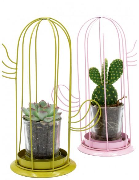 piantine di cactus