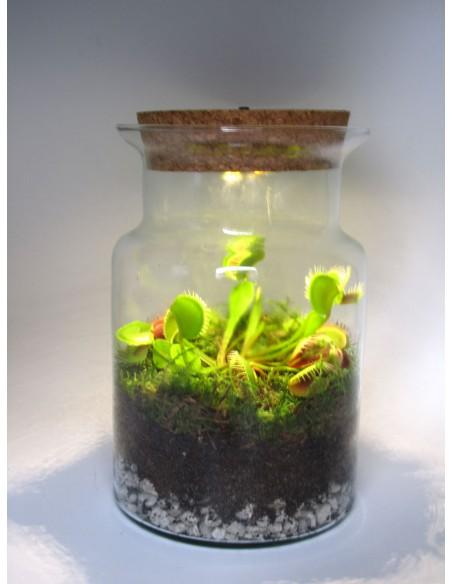 Dionaea pianta acchiappamosche