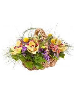 Allegro Cestino di orchidee