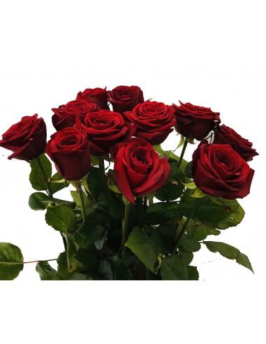 11 rose rosse