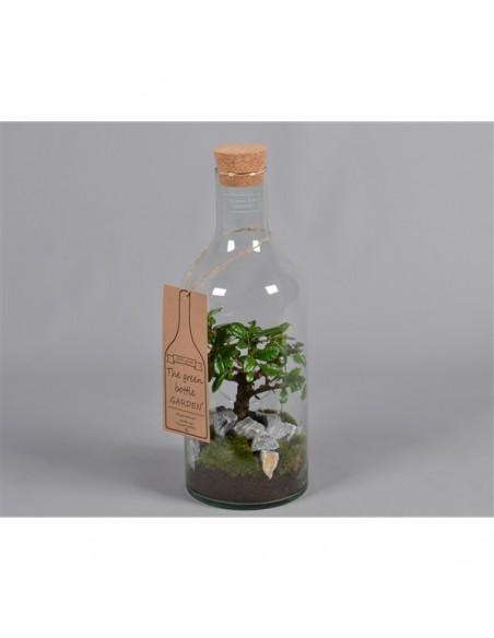 Bonsai in bottiglia, piante in vetro , piante in bottiglia