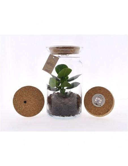 pianta in vetro