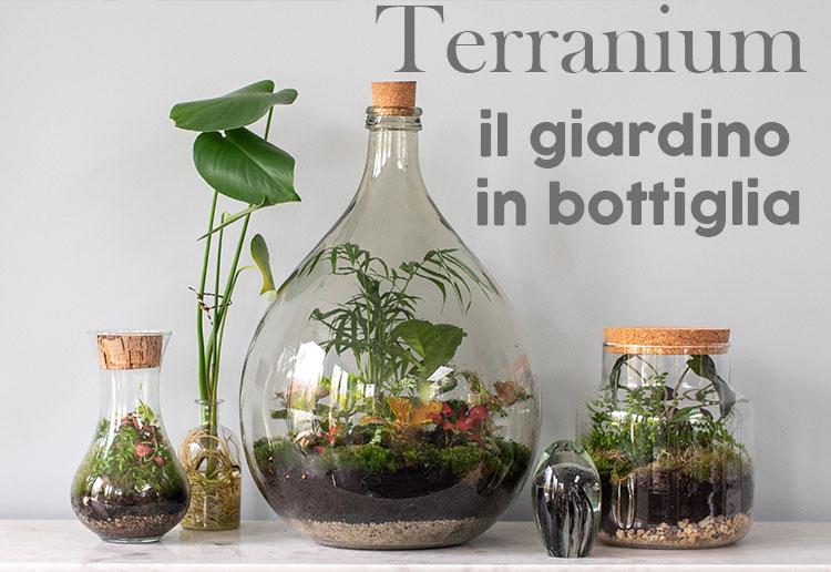 Vendita Terranium Online Napoli