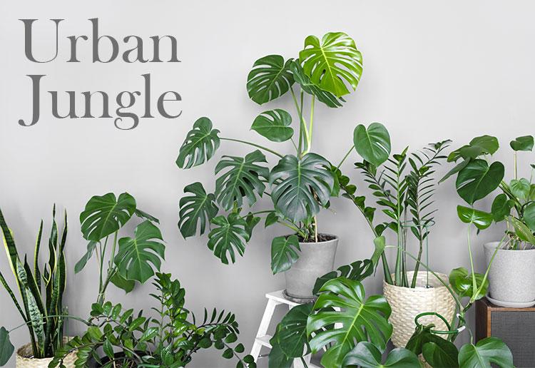 Vendita Piante Urban Jungle Online Napoli