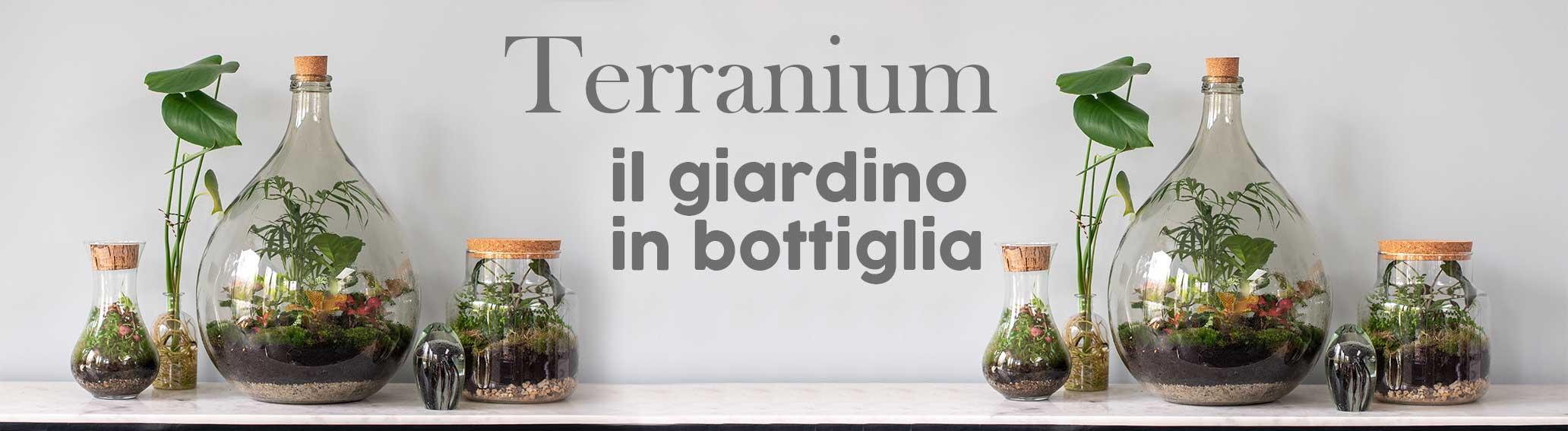 Terranium Piante in Vetro Online